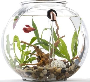 how to clean your fish tank after ich