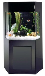 aquacustom 50 gallon shadow box aquarium