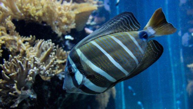 best 40 gallon fish tanks