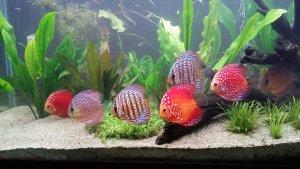 Best 55 Gallon Fish Tanks