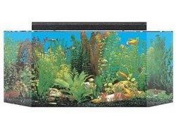 seaclear 26 gallon flat back hexagon acrylic aquarium combo set