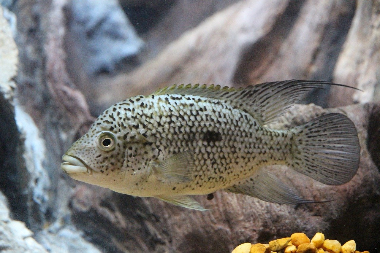 Internal filters for aquarium: advantages, disadvantages and features of choice