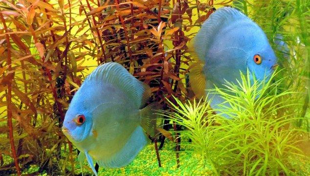 Best Fish Tank & Aquarium Power Filters