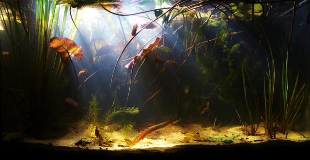 Visit http://biotope-aquarium.info/info/what-is-a-biotope-aquarium/ to learn more about this image and biotopes.