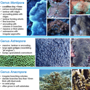 Coral Guide Page