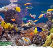 12 Easy Steps To Setting Up Your Own Aquarium At Home