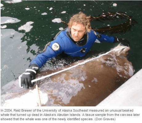 Reid Brewer Measures Whale