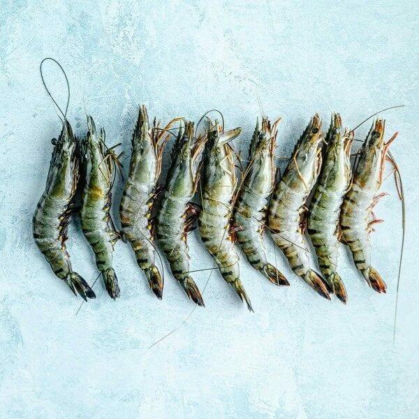Creveti mari salbatici senegal 20/30
