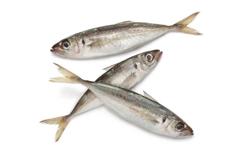 Stavrid- peștele adevăraților gurmanzi