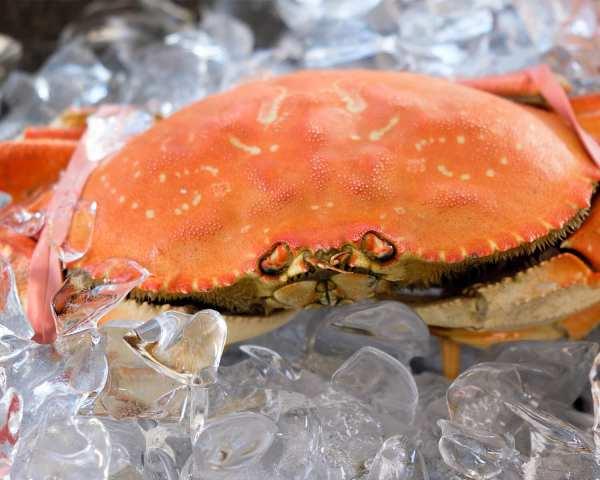 Crab gigant dungeness 600/800g