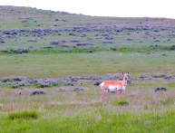 She just stood and looked at me. She's lucky I wasn't looking for pronghorn meat.
