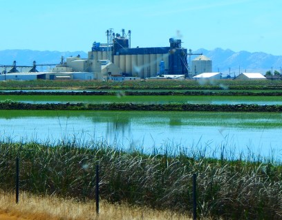 Rice is clearly big business in the Sacramento Valley. That is a rice mill/dryer/storage facility.