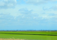 The rice crop was growing nicely and there were thousands of acres of the stuff.