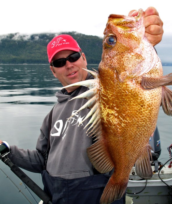 Rockfish were more than thick in some spots
