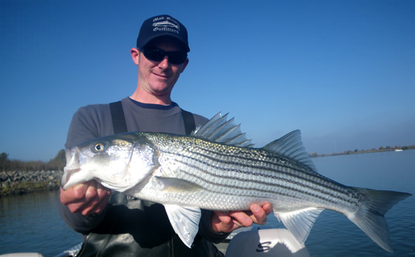 striper-to-eat