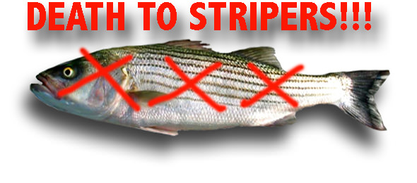 death-to-stripers