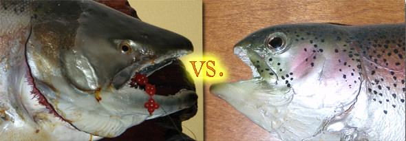 fish-war