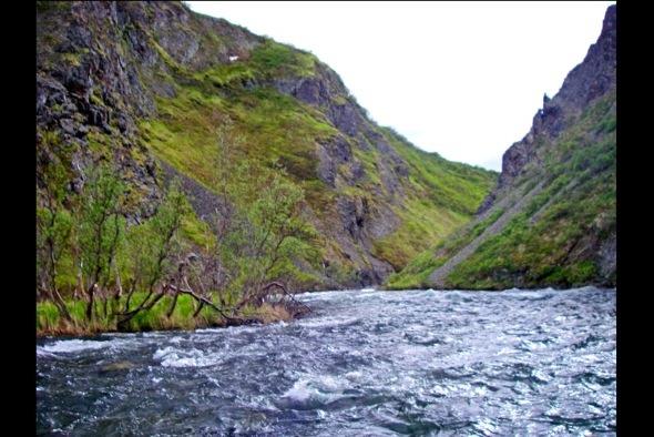 Wild Alaska!