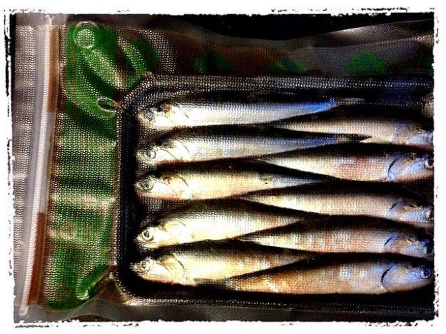 Tray bait