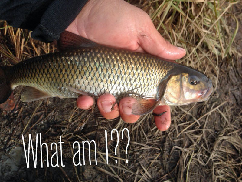 Salmon-River-Fish