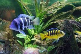 tropical fish hobby