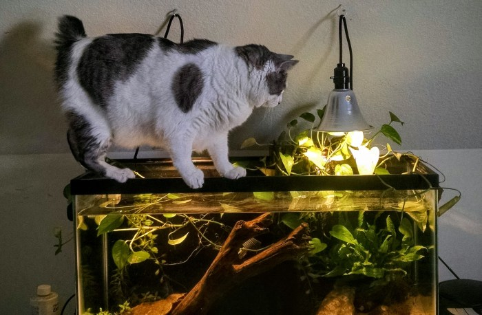 Cat aquarium balancing act