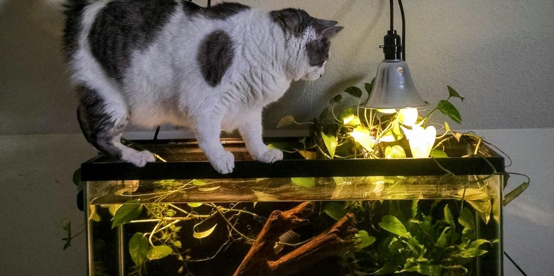 Cat aquarium balancing act
