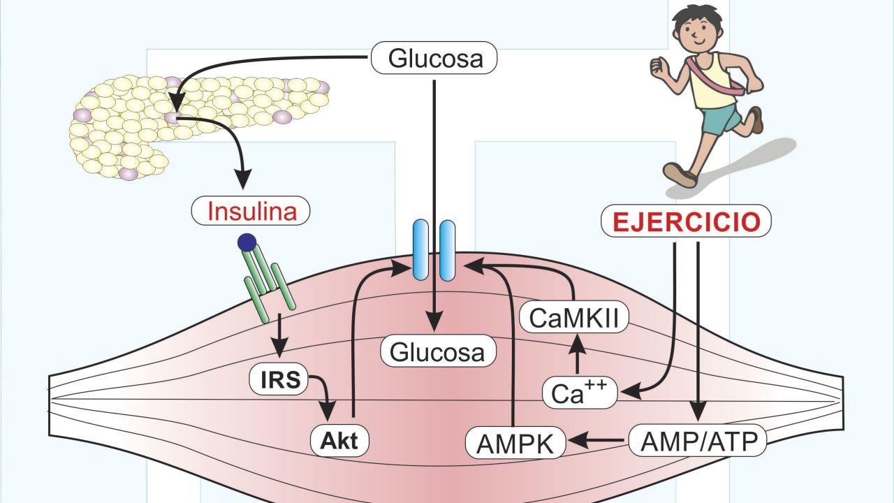 Efectos-del-Ejercicio-en-el-manejo-de-la-Diabetes