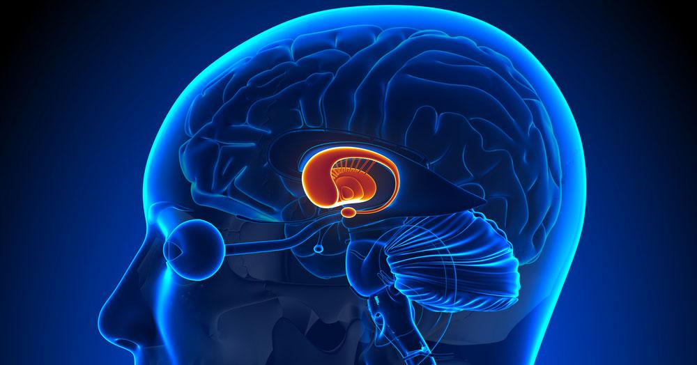 El impacto del ejercicio sobre el BDNF (factor neurotrófico derivado del cerebro) en adultos de edad avanzada