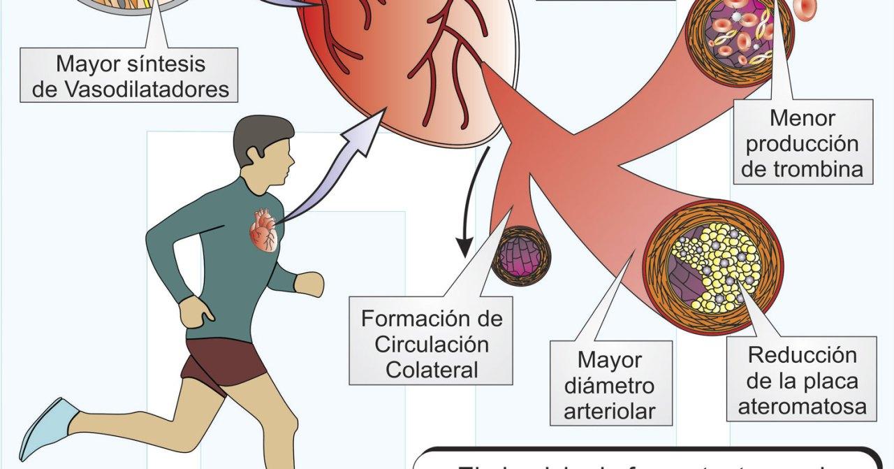 Ejercicio-Físico-y-Perfusión-Miocardica