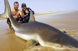 Fiskerejser Sydafrika haj