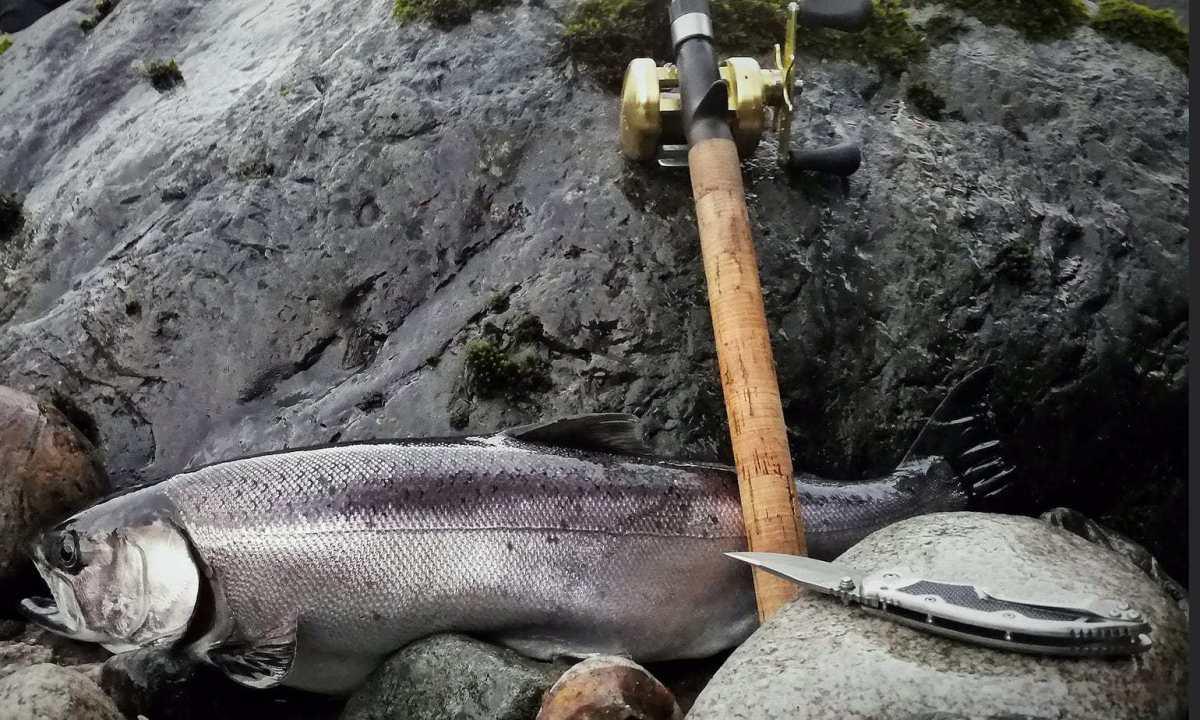Fiskerejser---sølvlaks-fra-chilliwack