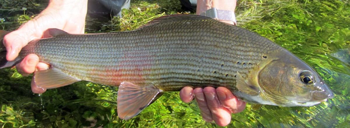 Fiskerejse-bosnien-Stor stalling