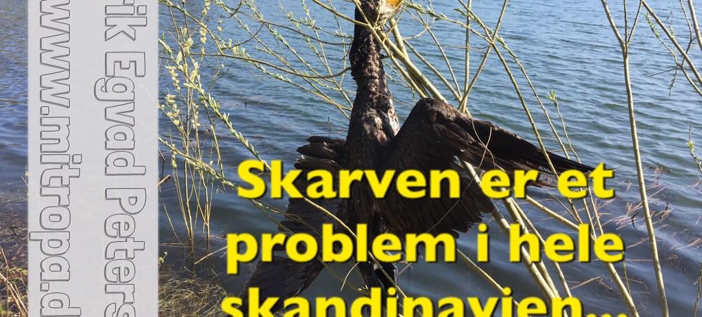 Nordisk samarbejde om konflikter mellem skarv og fiskebestanden