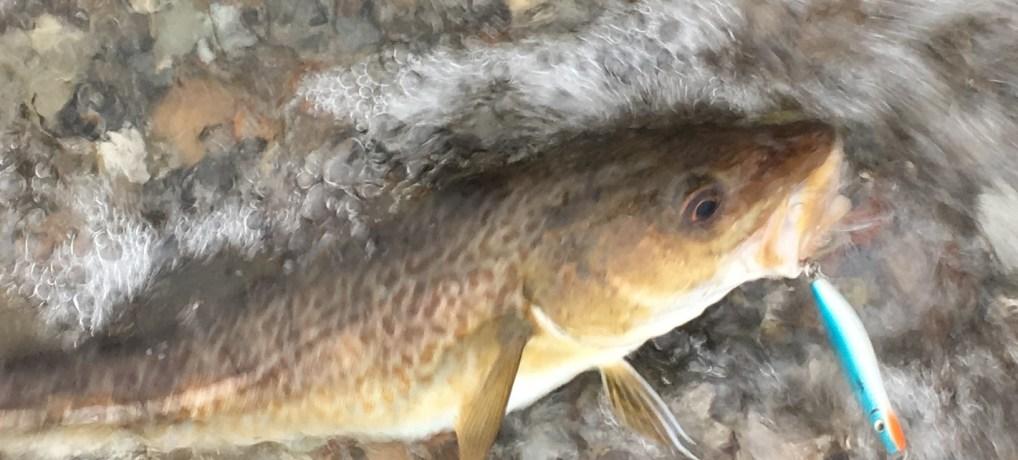 2019 bliver et vildt år for lystfiskerne