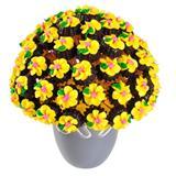 Sunny Kurabiye Çiçek