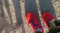 Pfoten und Füße
