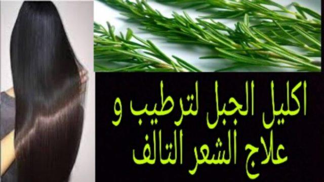 فوائد إكليل الجبل للشعر معجزة في التطويل والتنعيم وإنبات خصل الشعر من الجذور