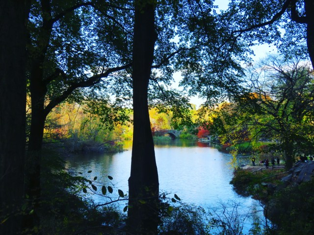 Central Park in Fall: NYC on a Budget