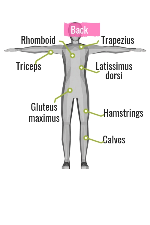 diagram of muscles on the back of the body