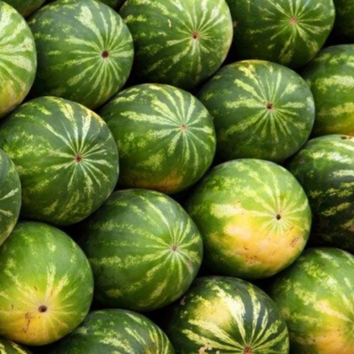picture of a stack of uncut watermelon