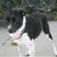 Foster Dog - Suki - Adopted