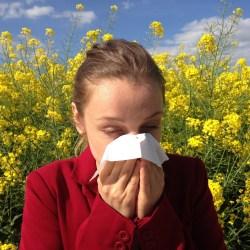 freelance allergies