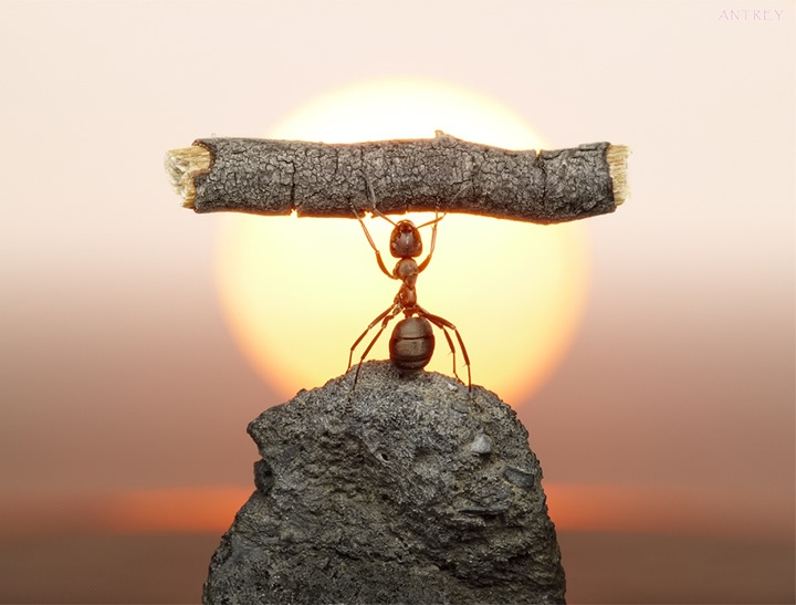 Ant on Rock
