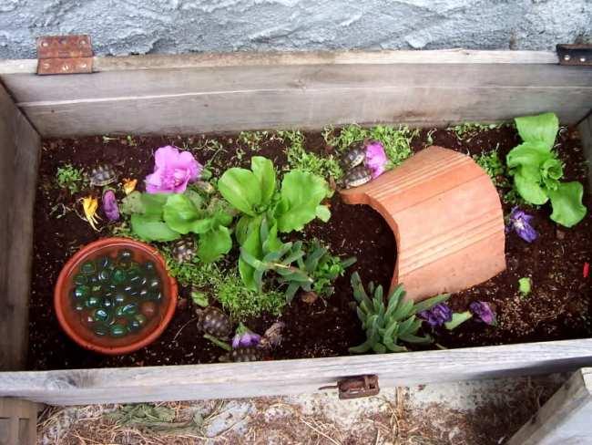 Terra da giardino dove comprarla idee per la casa - Terra da giardino ...