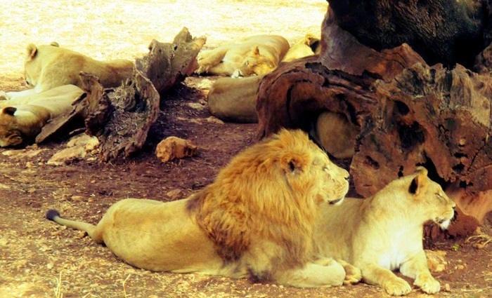 zoo-safari-2