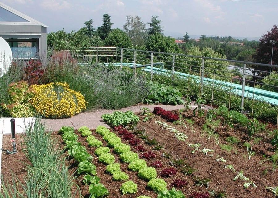 Come fare un orto in casa sul terrazzo