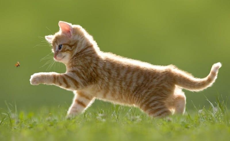gatto-estate