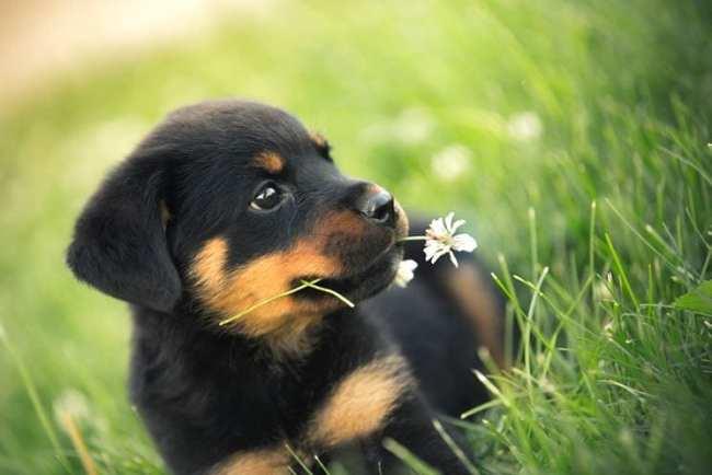 Educare Un Cane Cucciolo 5 Consigli Utili Fitmivida