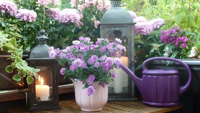 scegliere le piante per il balcone